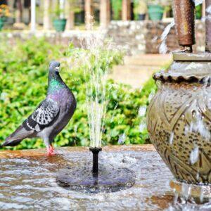 solar-bird-bath-fountain